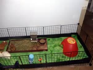 cny piggies our c c cage for guinea pigs