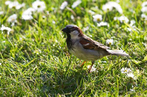 vögel im garten bestimmen vogel im garten bestimmen carprola for