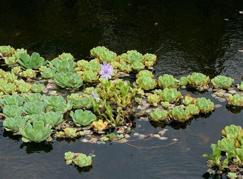 aquatic shoreline plant selection home garden