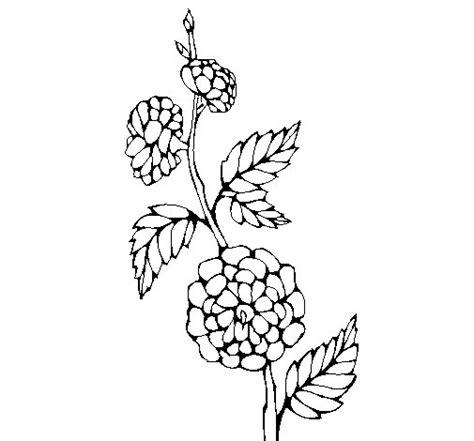 rami di fiori da colorare disegno di ramo fiorito da colorare acolore
