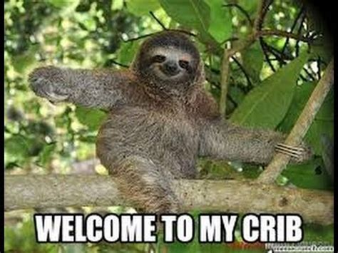 Cute Sloth Meme - funny sloth memes 2014 animal memes youtube