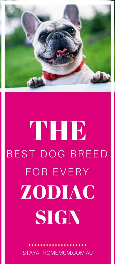 choosing the best dog breed for your family and children the best dog breed for every zodiac sign stay at home mum
