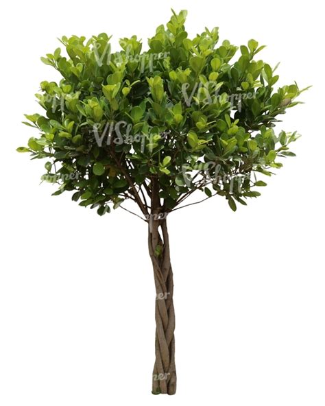 cut out small decorative tropical tree cut out trees and plants vishopper