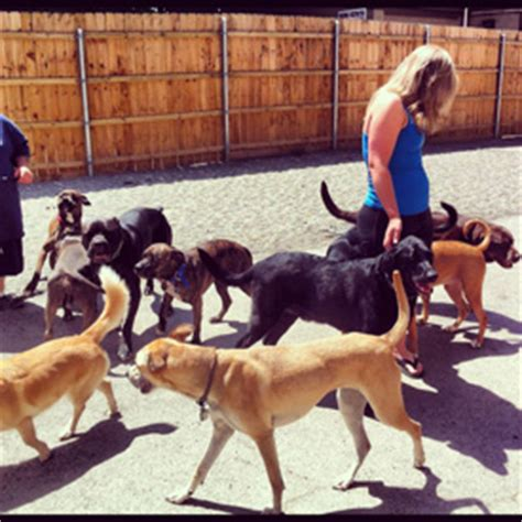 puppy and socialization advanced pack socialization reduce s fear and stress wny