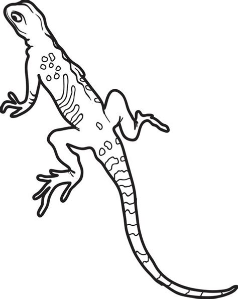 Free Printable Lizard Coloring Page For Kids Lizard Colouring Pages