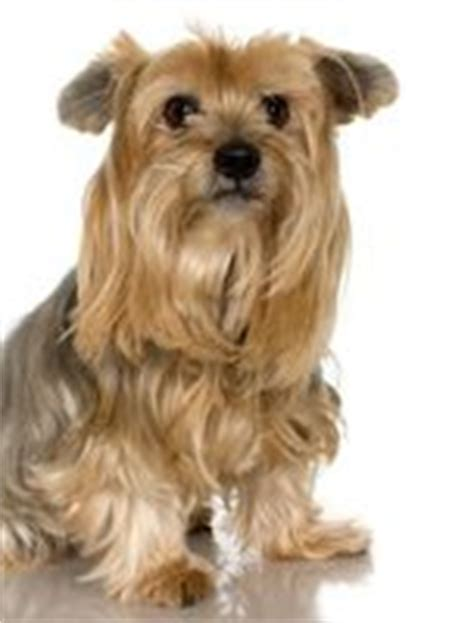 how to potty your yorkie how to potty a two year yorkie that was ehow