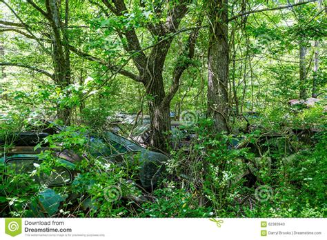 car with tree image junkyard cars and trees royalty free stock image cartoondealer 9943960