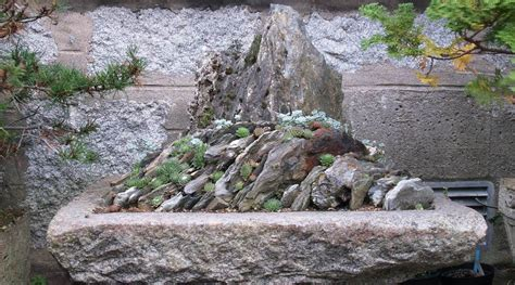 Scottish Rock Garden Society Scottish Rock Garden Club Rock Terrace With Sedums And Saxifrage Plants Garden Pinterest