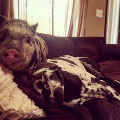chelsea houska teen mom pig 1000 images about chelsea houska on pinterest