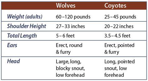identify breed by characteristics wolf identification western wildlife outreach