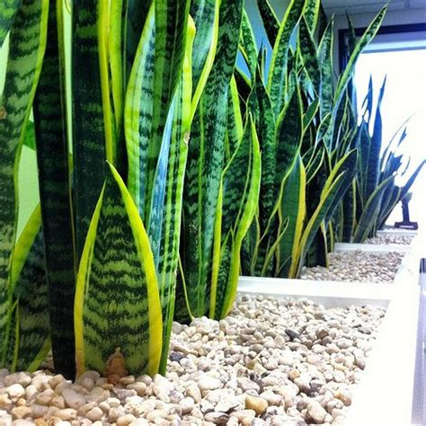 office plants revealed indoor plants hq