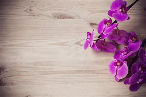 come coltivare le orchidee in vaso orchidea come coltivarla in casa e in giardino