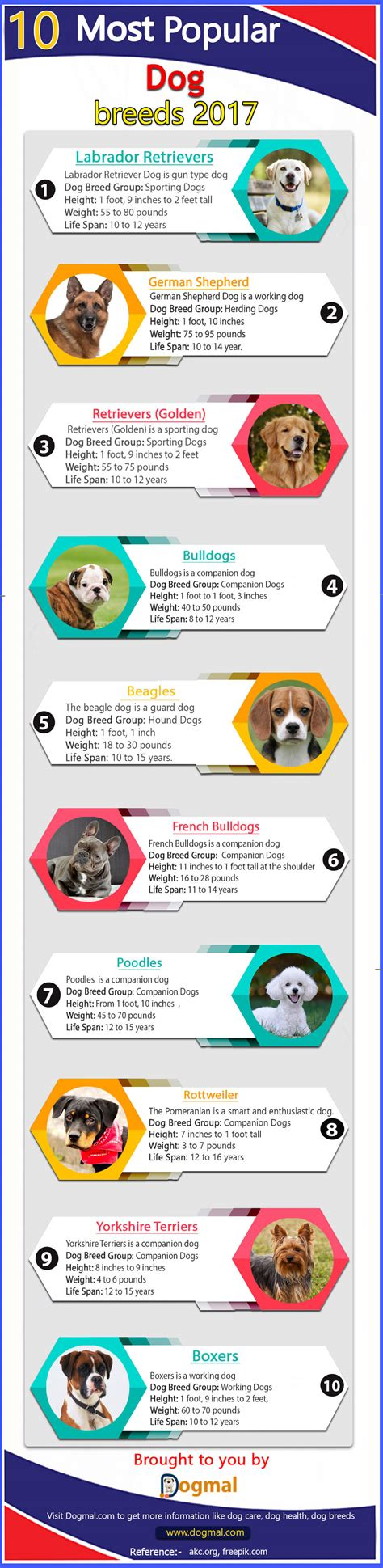 what is the most popular breed top 10 most popular breeds 2017 by akc infographic
