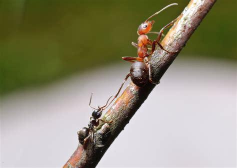 Ameisen Vernichten Im Garten 4814 by Gartentipps Ameisen Wirksam Vertreiben ǀ Husmann