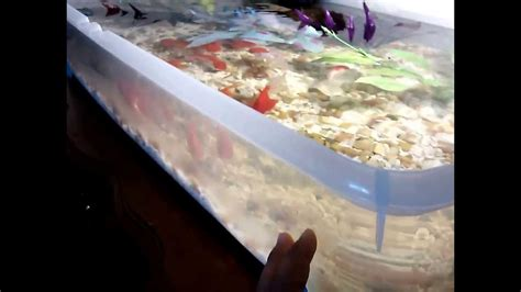 aquarium bathtub indoor fancy goldfish pond aquarium youtube