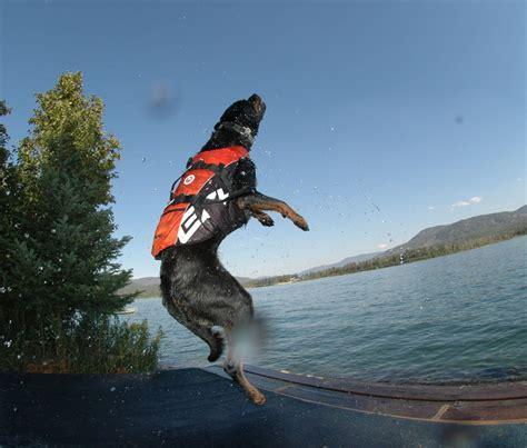 gilet de sauvetage pour chien accessoires  gadgets pour animaux  etrange
