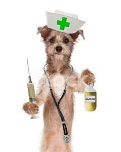 Flowers For Nurses Week - dog nurse shot and vaccine bottle stock photos