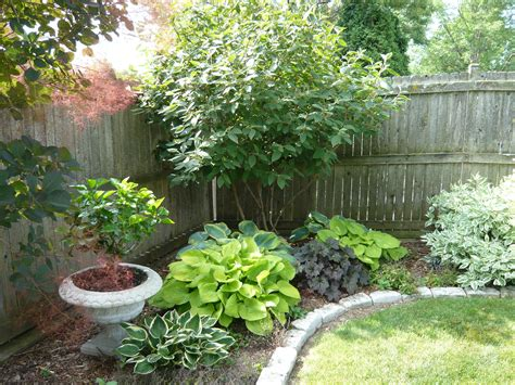Best Shade Tree For Backyard by Shade Plants Backyard Ideas