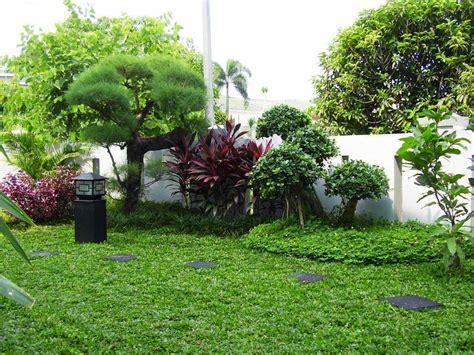 Pupuk Perangsang Bunga Yang Bagus halaman depan rumah untuk tanaman check out halaman depan