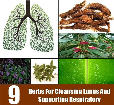 5 Herbs To Detox Lungs by Top 9 Herbs For Cleansing Lungs And Supporting Respiratory