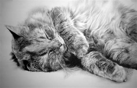 stunning photo realistic pencil drawings  paul lung