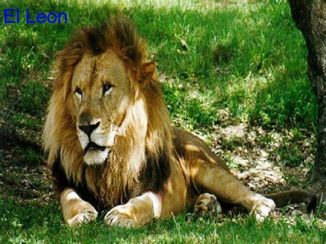 imagenes de animales silvestres animales salvajes