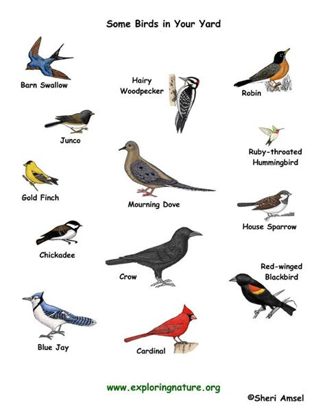 let s learn about unique birds letã s some types of birds and their names birds