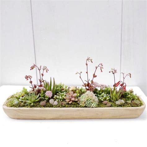 Succulent Dish Garden Ideas Dish Garden Succulents And Centerpieces On Pinterest