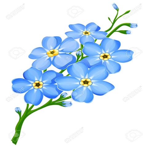 imagenes de flores a color rama de color azul me olvides flores no aisladas ilustraci