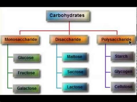 8 types of carbohydrates types of carbohydrates