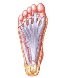 causes of plantar fasciitis integrative chiropractic