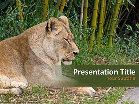template powerpoint lion free female lion powerpoint template download free