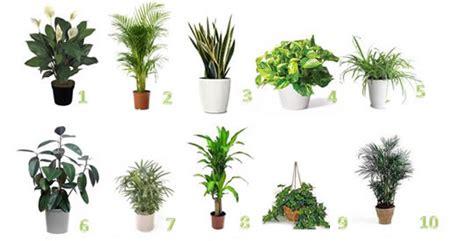 piante da interno purificano l le piante purificano l di casa eliminando acari