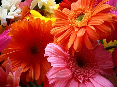 beautiful flower wallpaper flowers for flower lovers flowers beauty desktop wallpapers