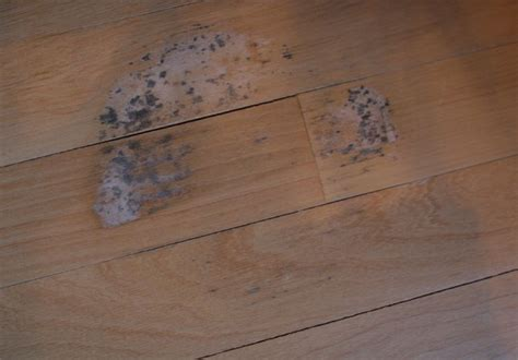 Hardwood Floor Stain Removal How To Remove Mold Stains From Wood Floors