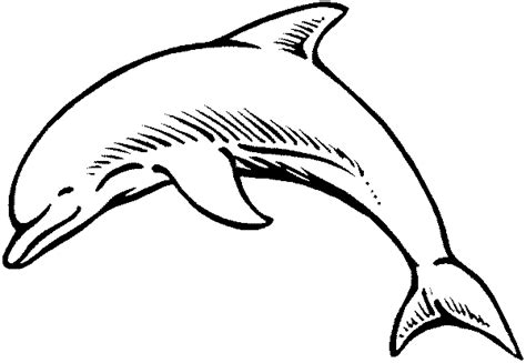 Dolphin Coloring Pages Dolphin Coloring Pages To Print Out