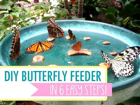 How To Make A Butterfly Garden by Make A Diy Butterfly Feeder In 6 Easy Steps Butterfly