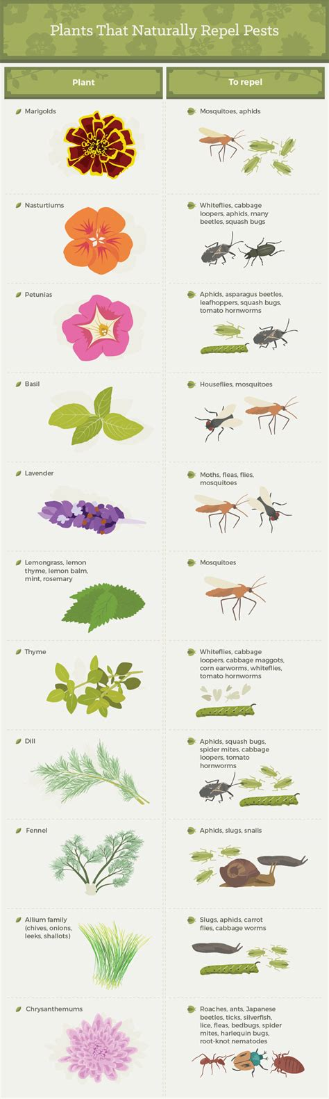 how to get rid of common garden pests fix com