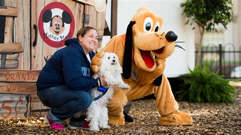 dogs at disney world walt disney world dogs pack shows its of paws disney parks