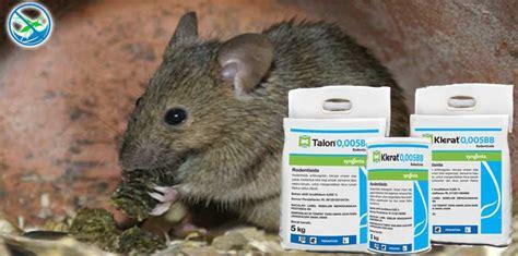 Jual Obat Pembasmi Tikus cara mudah membasmi tikus dan meggunakan obat basmi tikus