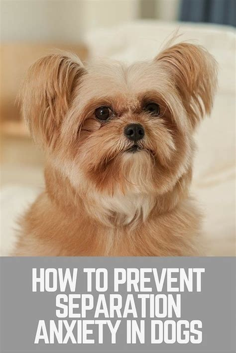 treating separation anxiety in dogs 25 best ideas about separation anxiety on poems from starting