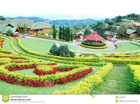 garten zierpflanze ornamental garden stock photography image 36006042
