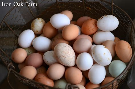 egg colors breeds for colorful eggs community chickens