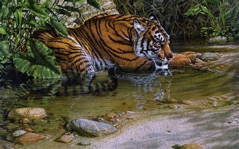 fotos animales tigres fotos de tigres en hd imagenes de pantheras tigris