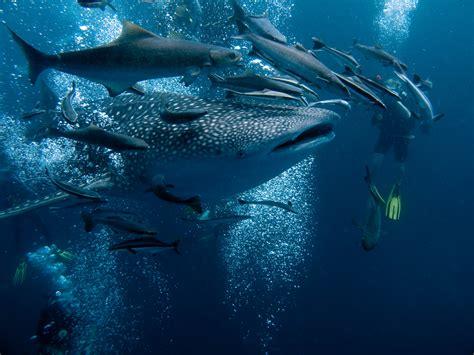 dive galapagos diving holidays galapagos