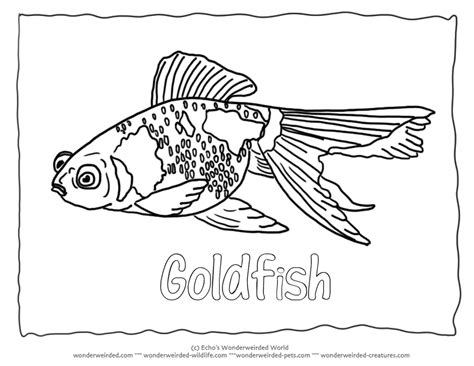 goldfish coloring page coloring home