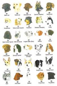 Home Interiors Apple Orchard Collection 28 types of dogs all list of different dogs breeds