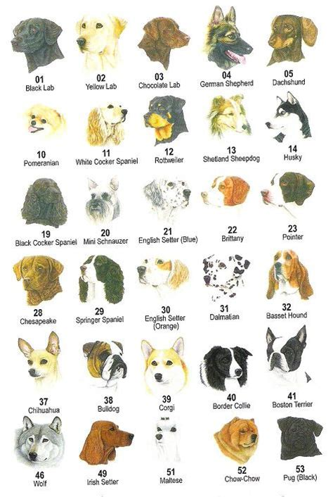 types of purebred dogs march 2011 furrytail world s animals site