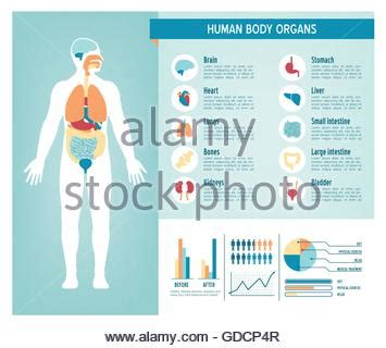 human body health care infographics, with medical icons