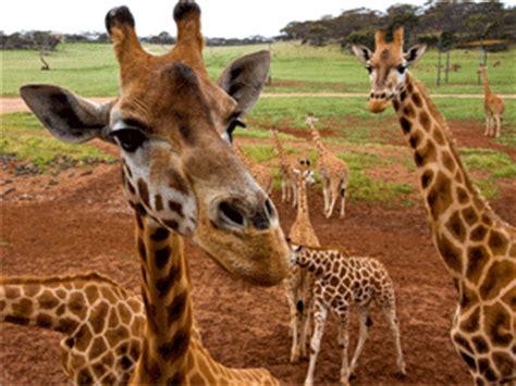 zoo cams    world